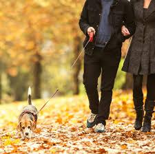 autumn_walking_2.jpg